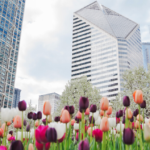Spring housing market update - chicago real estate